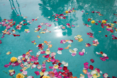 terrysdiary:  Rose petals in a pool.