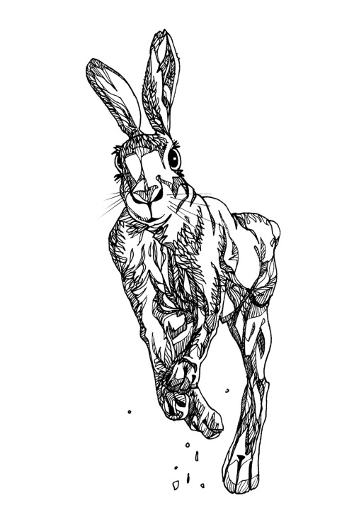 drawing of a Hare running