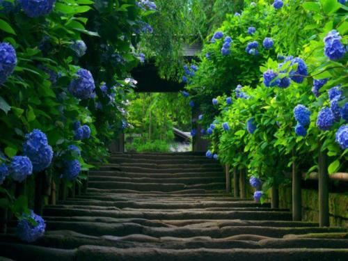 If the path be beautiful, let us not ask where it leads. ~ Anatole France