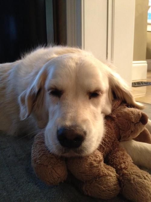 She can't sleep without her teddy bear. Submitted by anonymous