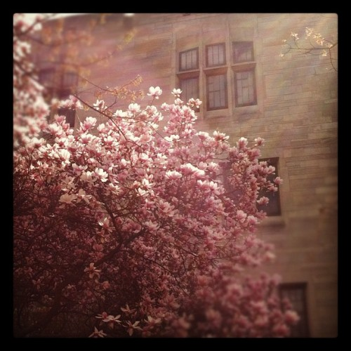 BLOOMington (Taken with instagram)