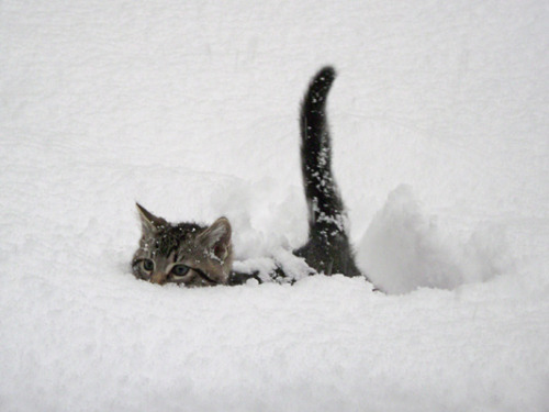 I spy with my little eye…a Sno Kitten!