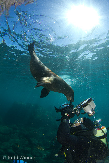Sea lion says hello to diver, taken in La Paz, Mexico By Todd Winner Brought to you by Underwater Photography Guide, the best online resource for divers and underwater photographers.