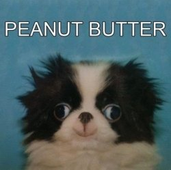 LOL dog puppy animal derp pup peanut butter