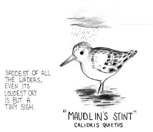 LOOK EVERYONE! A RARE BIRD.  I've started a mailing list to which folk can sign-up. Updates will be occasional, but will consist of news, preview images and special offer codes exclusive to the list. What more excuse could you need to sign-up now? Also: don't forget you can pre-order Smoo #5 from me now! Visit my shop for info.