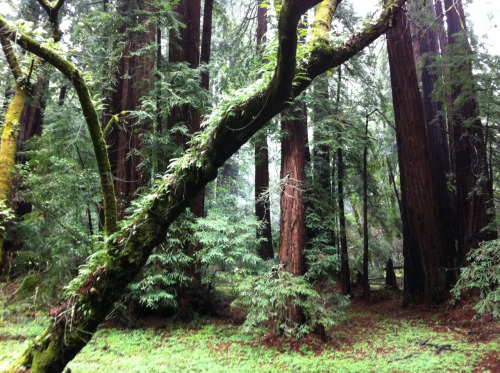 Muir Woods, Mill Valley CA