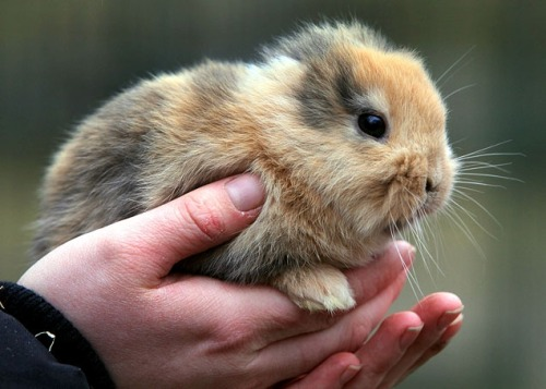 This earless rabbit was supposed to be a German zoo's main attraction. The problem is, Tiny Til drew press, specifically a photographer who … um, stepped on him and killed him. Let this be a lesson to photojournalists: Don't kill your subjects, especially if they're cute. (Photo by Uwe Meinhold/Associated Press)