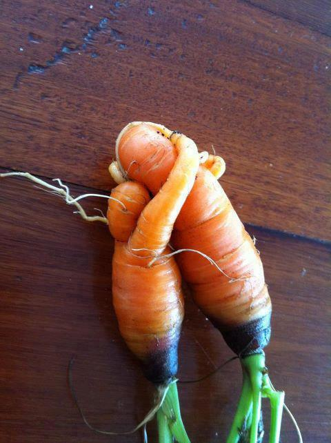 "Living love affair!   carrots kick ass.  ""Study nature, love nature, stay close to nature. It will never fail you."" - Frank Lloyd Wright"