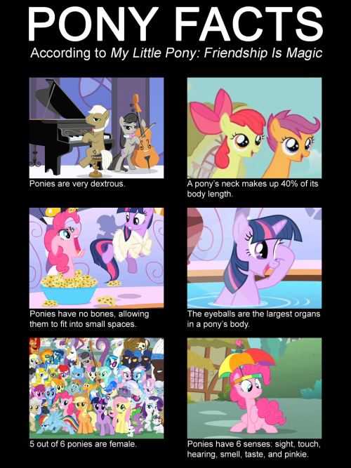 bronycurious:  I finally made it instead of just talking about it.  : )  Another quality submission by Siryl. The man just keeps the goodness coming.  … Yesterday I made this image poking fun at this quaint cartoon in which I have a vague interest, and submitted it to a blog.  In one day it's achieved three times as many notes as the most popular post on my own blog. I wanted to write some kind of witty observation about this…phenomenon?  Except I have no idea how to even process this, much less formulate an articulate response.
