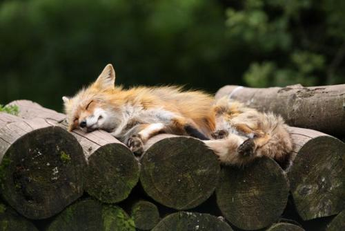 magicalnaturetour:  Siesta by Manfred Lauterbach