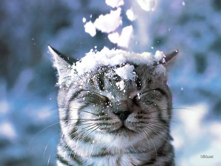 cat and snow (via 22gee.org)