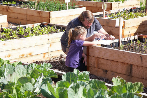 265. Plant a garden together. See what grows.  (photo: USFS Region 5)