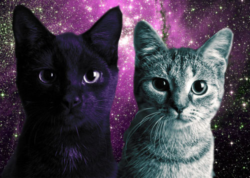 CATS, IN SPACE