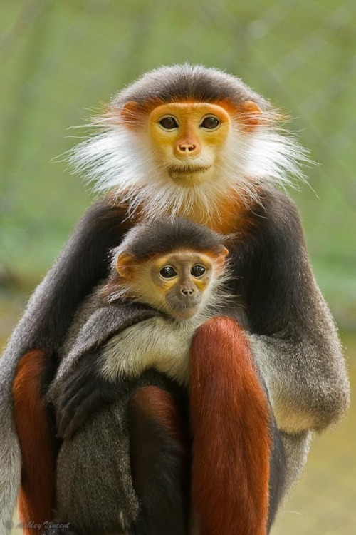 wild-feral-free:  ppen:  Monkey mom.  Beautiful creatures!