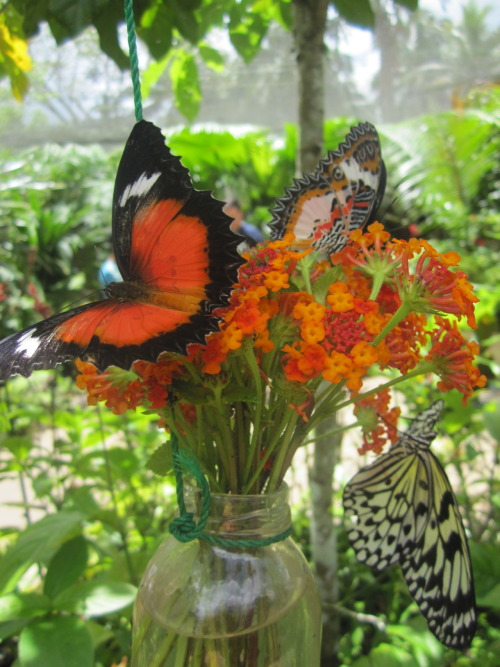 s-p-r-i-n-g:  butterfly conservation centre - bohol, philippines