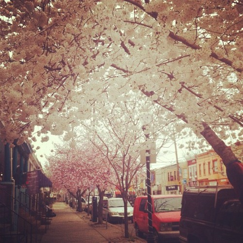 stephanieguttenplan:  Hello Spring. (Taken with instagram)  The Avenue is looking super today. :]