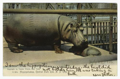 "July 27, 1906: ""I saw the hippopotamus yesterday. The heat did not bother him. He was taking a bath. Your Father.""  #CuteThingsDadsSendTheirKids From the Mid-Manhattan Picture Collection."