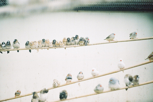 definitelydope:  bird on a wire (by mtaylorz11)
