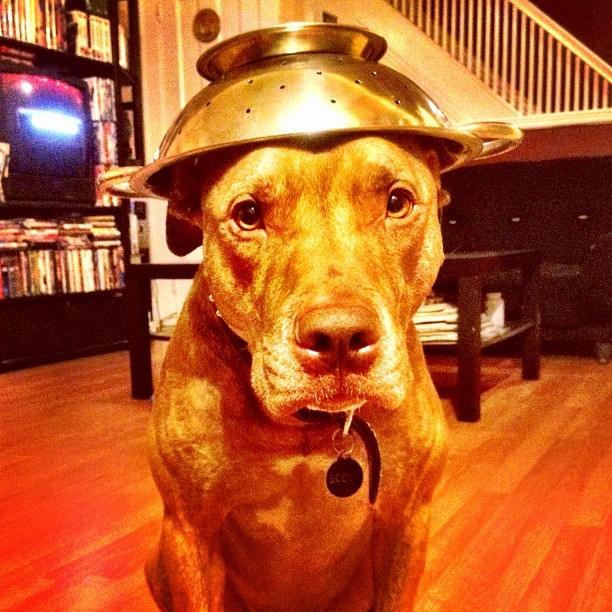 #stuffonscoutshead  - website request (Taken with instagram)