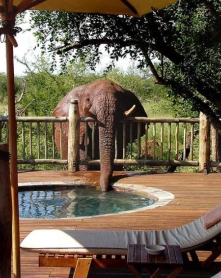 Stealing Water Level: Elephant