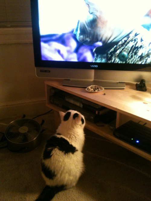 Bert watching a show about cats