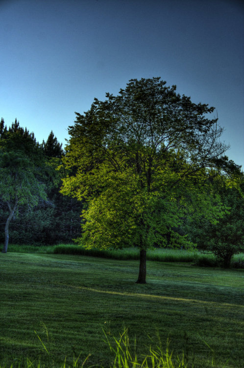 live-vibe:  natures-garden:  Evening shade by ~Soulreaperking  Landscape blog