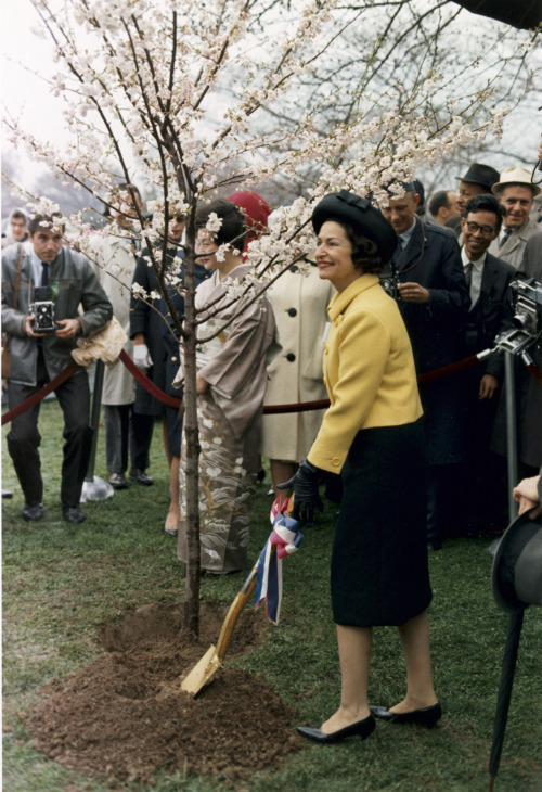 ourpresidents:  Washington D.C.'s Cherry Blossom Festival has begun.  Here's Lady Bird Johnson planting a tree by the Tidal Basin during the 1965 Festival.  Washington D.C., 04/06/1965  I'm curious about the (presumably) Japanese woman behind Lady Bird. Was she a performer for the festival?  The wife of the ambassador?    Update: Thanks to willowispschopsticks and Wikipedia, the Japanese woman is Ryuji Takeuchi, wife of the Japanese ambassador.