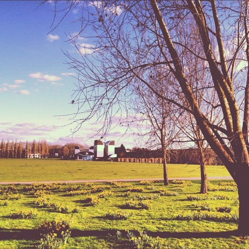 instahipsta:  The 3 Trees Look South #daffodills #the3trees #thethreetrees #millwallpark #isleofdogs #eastlondon #london #england #greatbritain #greengrass #bluesky #whiteclouds #south #islandgardensdlrstation #coolingtowers #trainviaduct #pathway #march #2012 #valencia #lux (Taken with Instagram at Millwall Park)  Are YOU on Instagram? Add me: thest