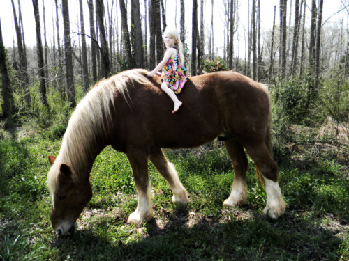 Dreamy, this is a picture of my daughter on our Belgian Horse Spartacus :)