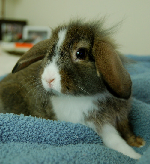 PHOTO OP: This Is a Bunny Via ants of the sky.