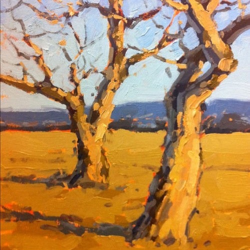 Another studio sketch of the these two trees atop Powell Butte.  (Taken with instagram)