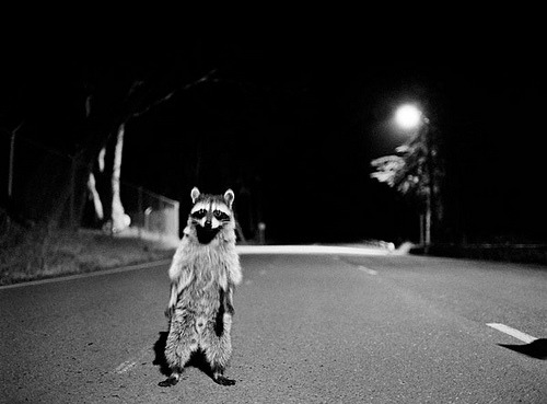 unlikelywords:  Raccoon_Costume (by coreyfishes) I get too many caption ideas from this. Via Kari