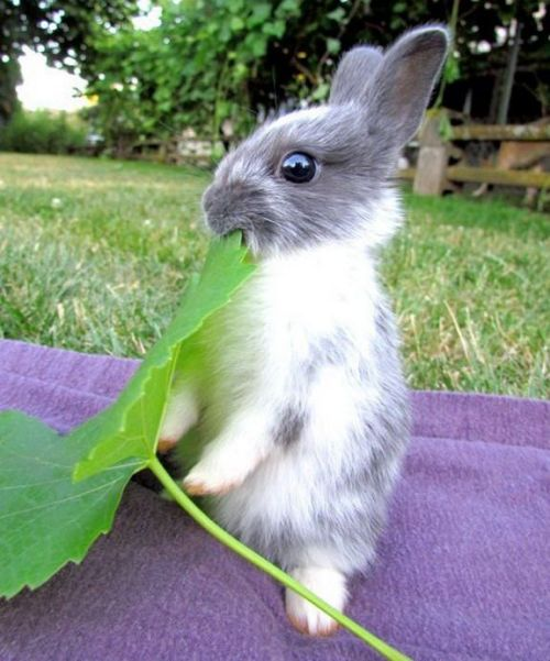 Eat your leafy greens! via:cutestuff