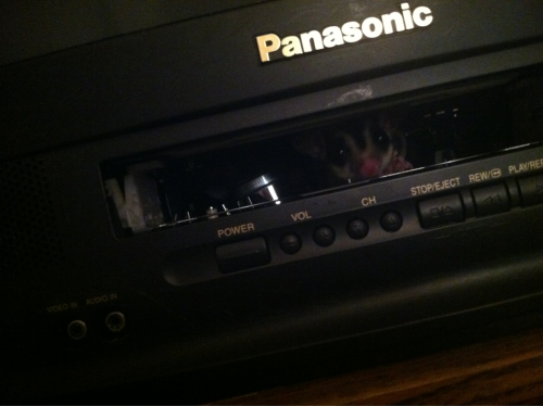 sarahanneisbiwinning:  Silly glider…you're not a VHS. Get out of the VCR