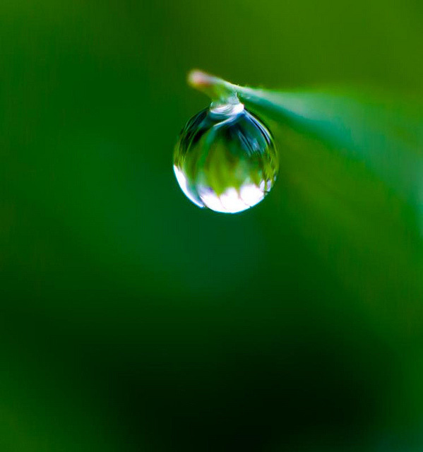 All alone by Steve-h on Flickr.A través de Flickr: A single raindrop dangling on the tip of a blade of grass down by the River Dodder.