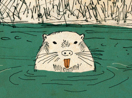 NYT has a really cute video about nutria in Washington state! They won't let me embed it though because they are total jerks but click through and you can watch it.  This lil' guy is so cute! All the fur stuff is a downer but it's historical background—a lot of historical background is a downer. #truth