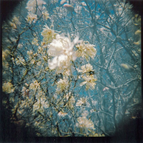 White flowers. Double exposure taken with my Diana F+, using Kodak Portra 160 film, and scanning the print.