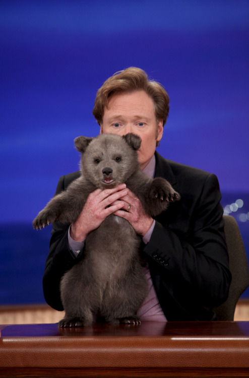 teamcoco:  From Animal Expert David Mizejewski's Baby Brown Bear Visit