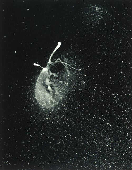 "invaderxan:  ""Egg nebula"" from the exhibition, ""Imaging and Imagining Space: A Collaboration Between Art and Science.""  Northwestern University's Center for Interdisciplinary Research in the Arts, Block Museum of Art, January 11 - February 18, 2001.  I think, in the morning, we should have eggs."