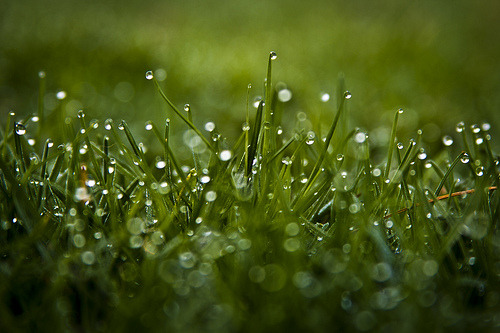 How do you dew bokeh? (EXPLORE #15) (by JasonManion)
