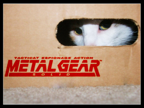 illiara:  Taticat Espionage ACTION!
