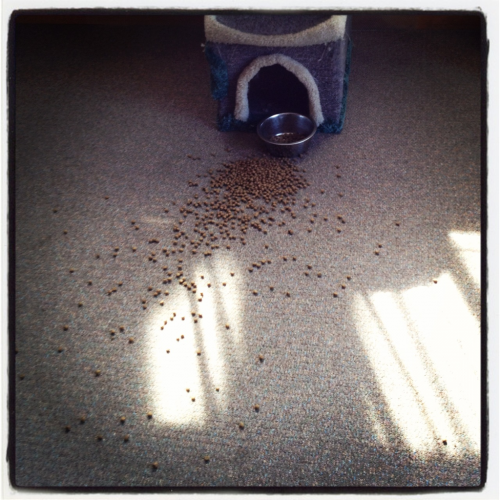 My cat decided to nock over the food dish right after i had swept.
