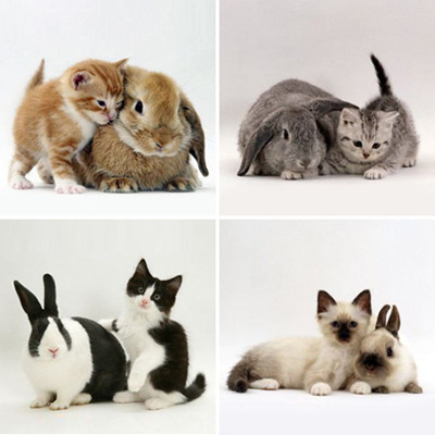 Kitties & Bunnies