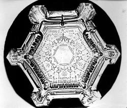 Wilson Bentley snowflake photograph.