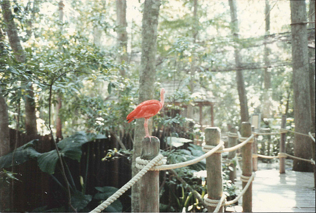 Discovery Island | Walt Disney World by BestofWDW on Flickr.