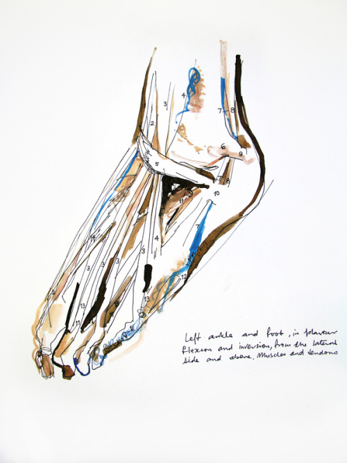 fuckyeahmedicaldiagrams:  Anatomy of The Foot (Study) by Stefanie Kenyon. Ink & gouache on heavy watercolor paper.
