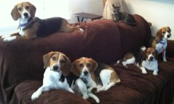 So many Beagles, so little time!!
