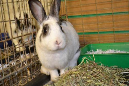 Meet Ava -  a beautiful female bunny! She is quite shy but very sweet natured and loving. Come meet her!