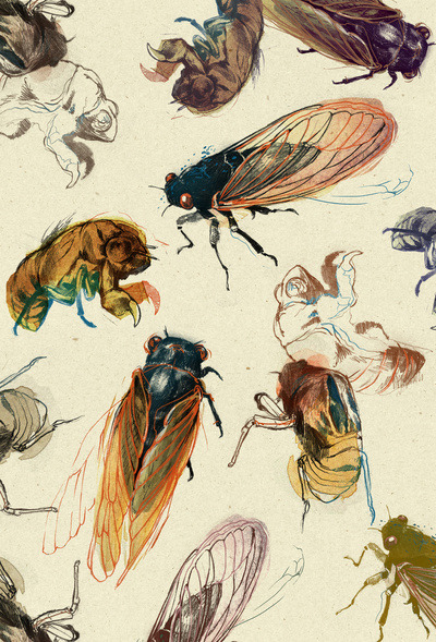 44oz:  (via summer cicadas Art Print by Teagan White | Society6)