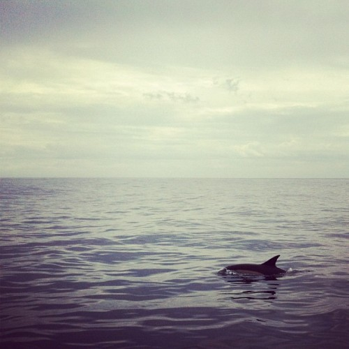 Sea Life #outatsea (Taken with instagram)